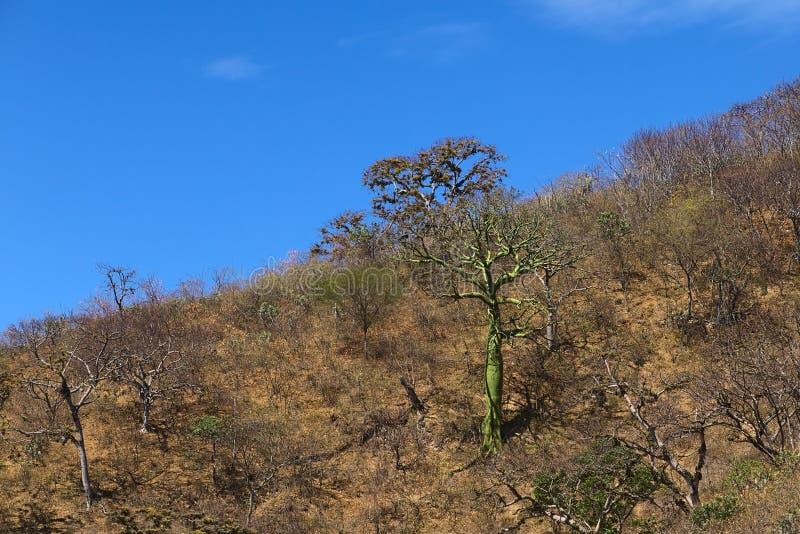 热带干燥森林在南厄瓜多尔 图库摄影