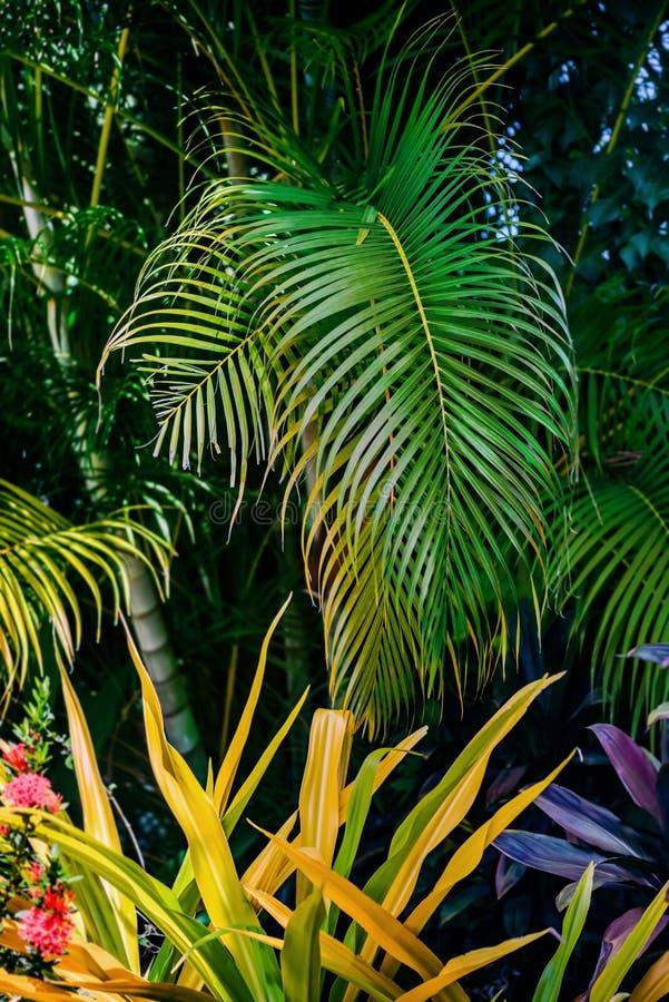热带庭院豪华的绿色叶子和植物 免版税库存图片