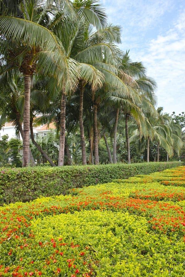 热带庭院 免版税图库摄影