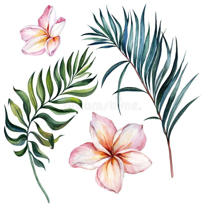 热带异乎寻常的花卉集合 美丽的桃红色羽毛在白色背景隔绝的花和绿色棕榈叶 免版税库存图片