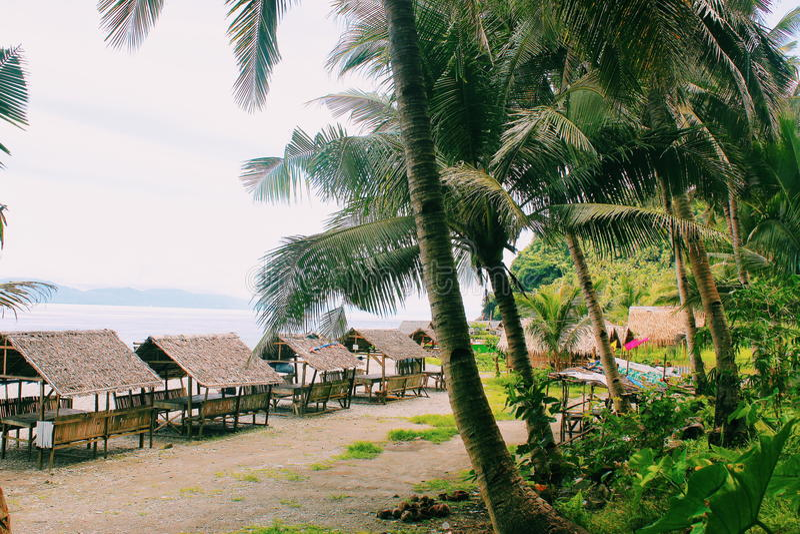 热带感觉 免版税库存图片