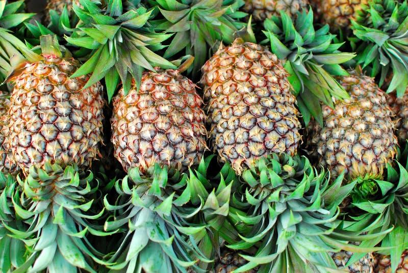 热带新近地被采摘的菠萝 免版税库存图片