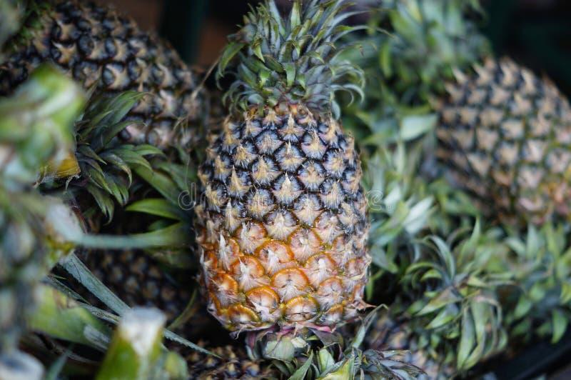 热带新鲜的菠萝 免版税图库摄影
