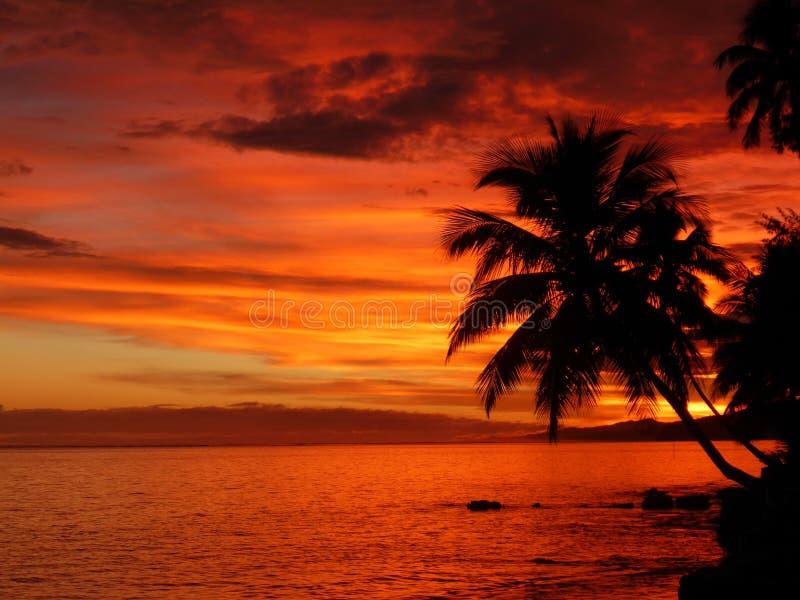 热带日落 免版税图库摄影