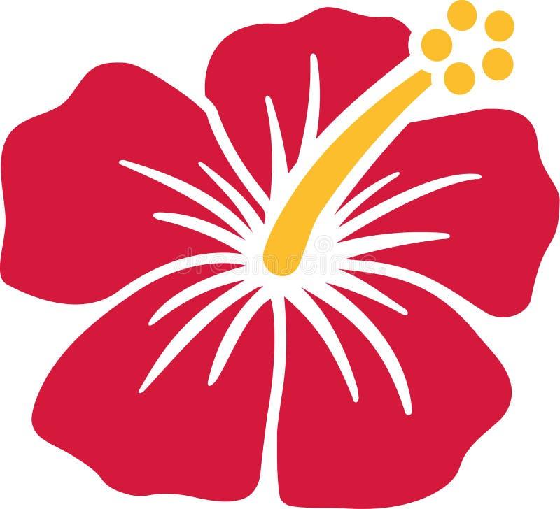 热带木槿花 向量例证