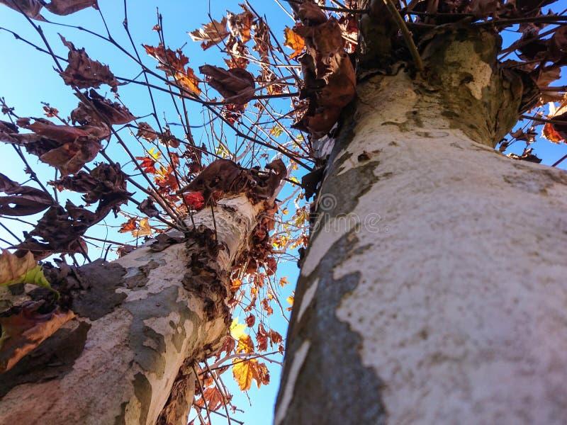 热带树剪影在天空蔚蓝02下的 库存照片