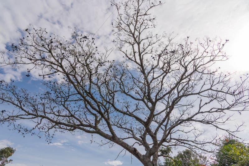 热带树剪影在天空蔚蓝01下的 免版税库存图片