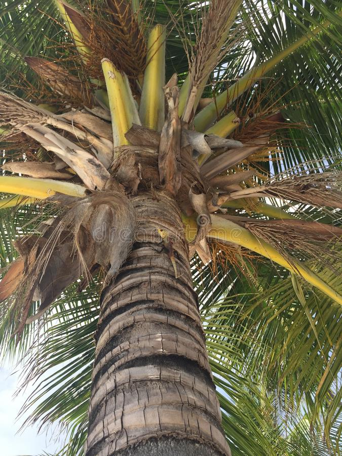 热带树在Kurumba海岛, 免版税库存照片