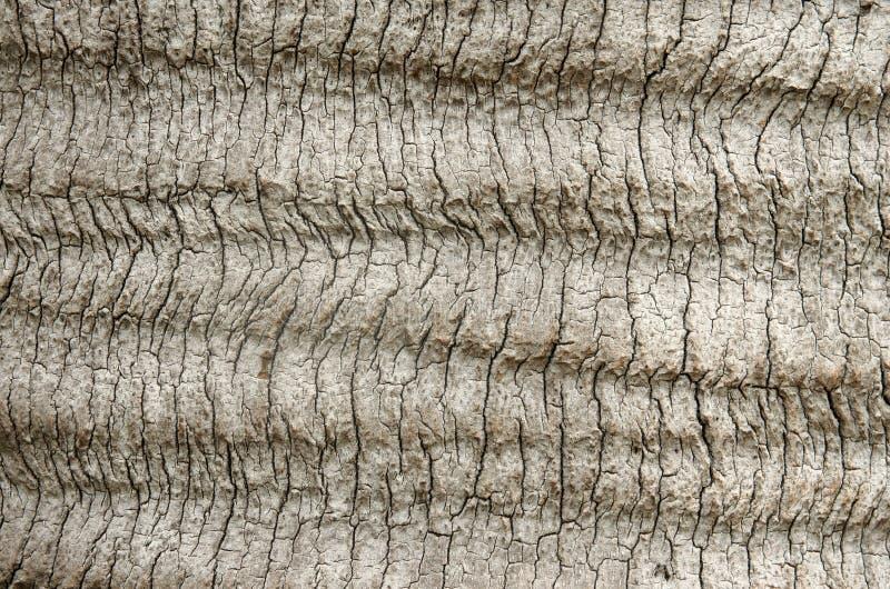 热带树外皮 免版税库存照片