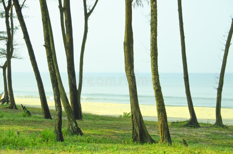 热带树树干  免版税图库摄影
