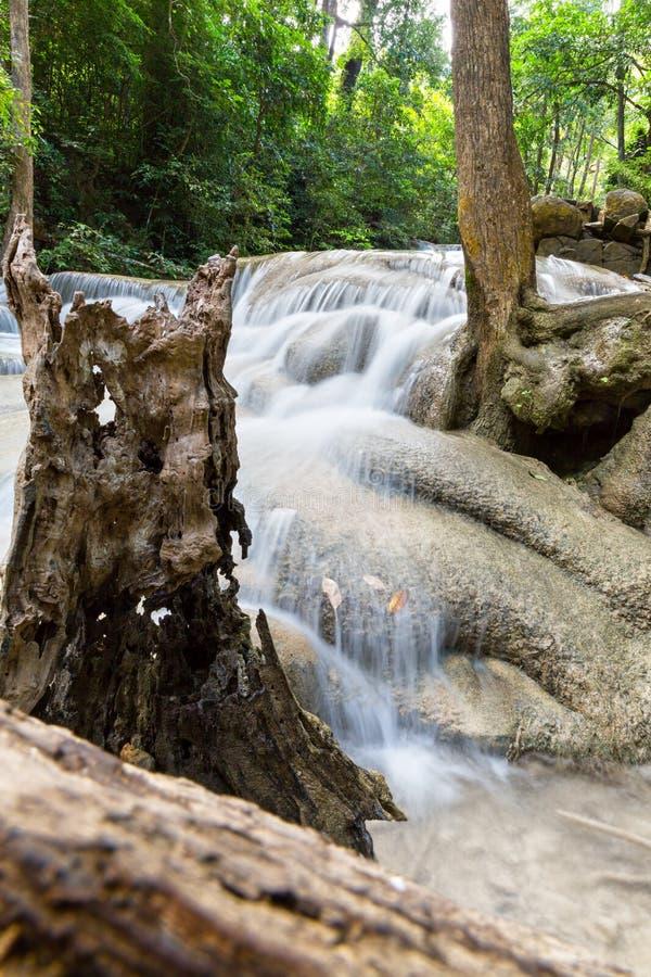 热带树根和水 免版税库存图片