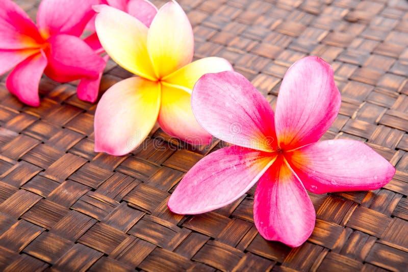 热带桃红色和黄色赤素馨花在被编织的席子开花 免版税库存图片