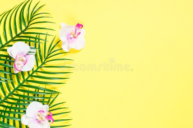 热带棕榈叶和兰花花 库存图片