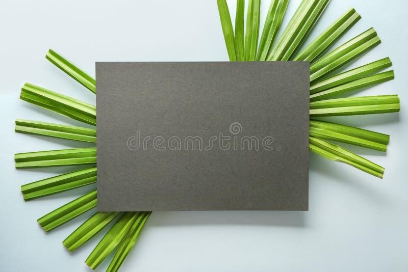 热带棕榈叶和空插件在轻的背景 库存照片