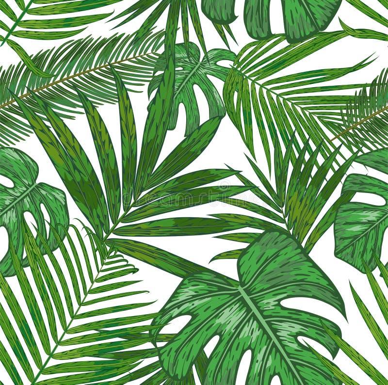 热带棕榈叶的传染媒介无缝的样式 槟榔树的美好的叶子背景,西米, how图片