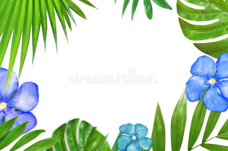 热带棕榈叶绿色纹理框架 概念查出的本质白色 免版税库存照片