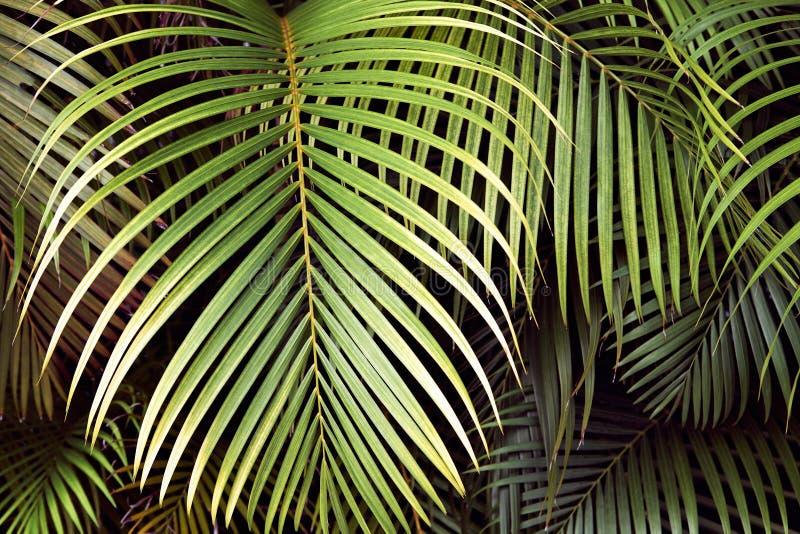 热带棕榈叶,密林叶子无缝的花卉样式背景 免版税库存照片