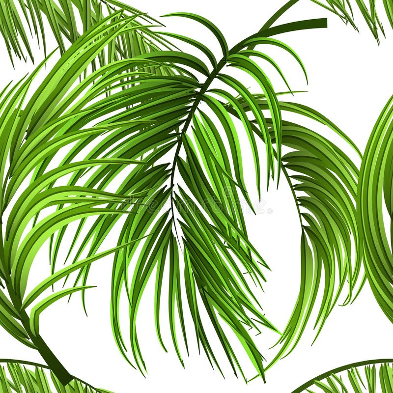 热带棕榈叶,密林留给无缝的传染媒介花卉无缝的样式背景 向量例证