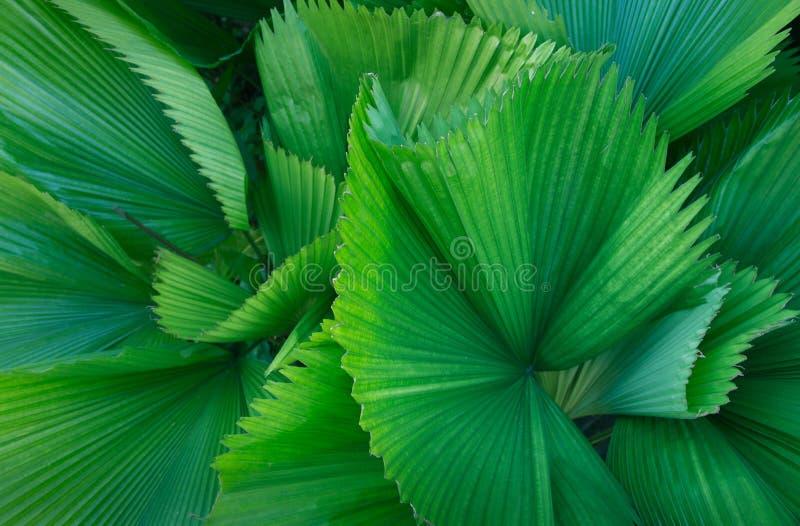 热带棕榈叶,热带叶子 免版税库存照片