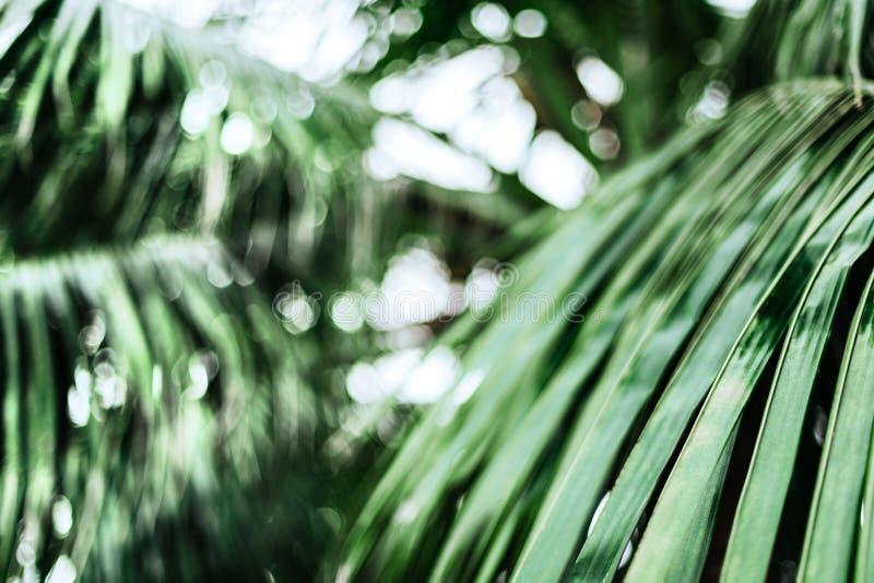 热带棕榈叶,花卉样式背景 库存照片