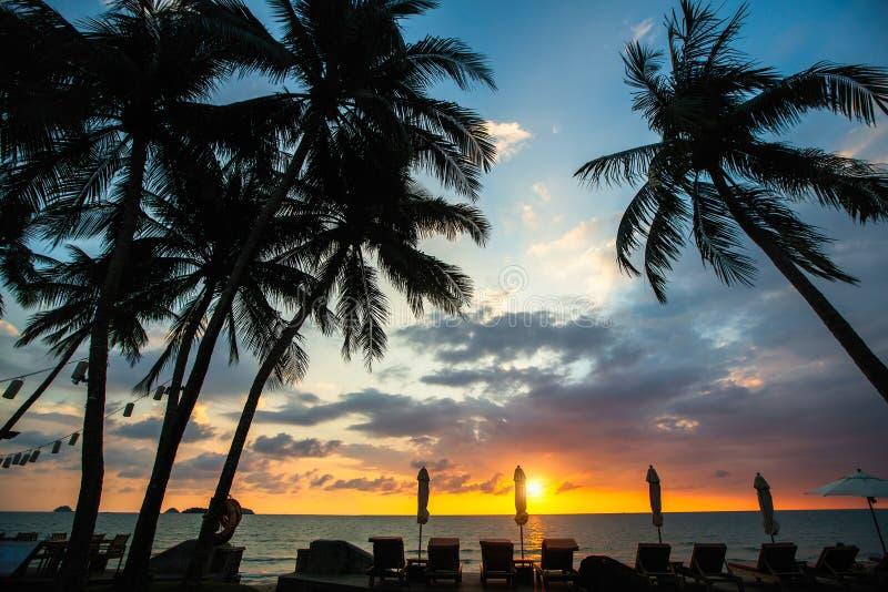 热带棕榈树现出轮廓反对在海海滩的一黄昏天空蔚蓝 ?? 免版税库存照片