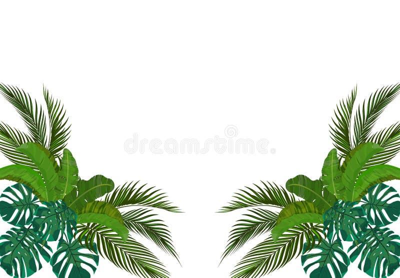 热带棕榈树的绿色叶子是对称的在边 Monstera,龙舌兰,香蕉 ?? 库存例证