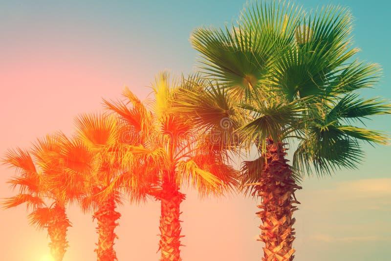 热带棕榈树行  免版税库存照片