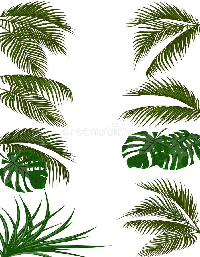 热带棕榈树集合绿色叶子  Monstera,龙舌兰 背景查出的白色 例证 库存例证