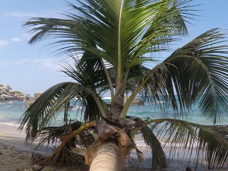 热带棕榈树 免版税库存照片
