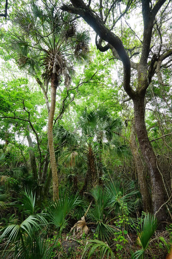 热带森林在佛罗里达 免版税库存图片