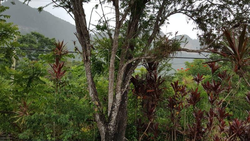 热带森林在圣・萨巴斯蒂安,波多黎各 免版税库存照片