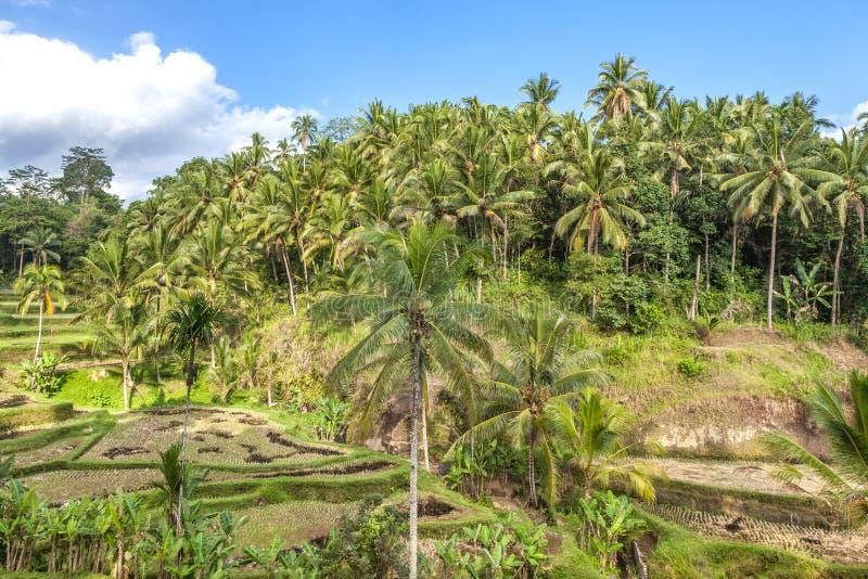 热带森林在巴厘岛,亚洲 库存图片