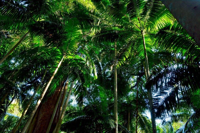 热带森林在Lamington国家公园,澳大利亚 图库摄影
