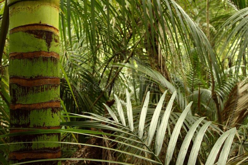 热带森林密林 库存照片