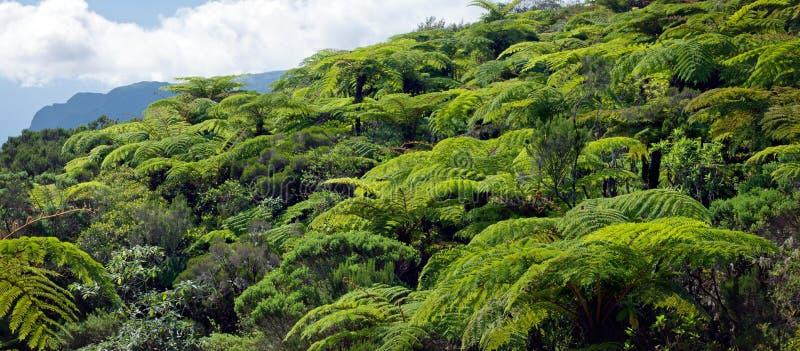 热带森林的雨 库存照片
