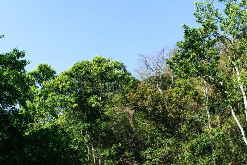 热带森林的雨 库存图片