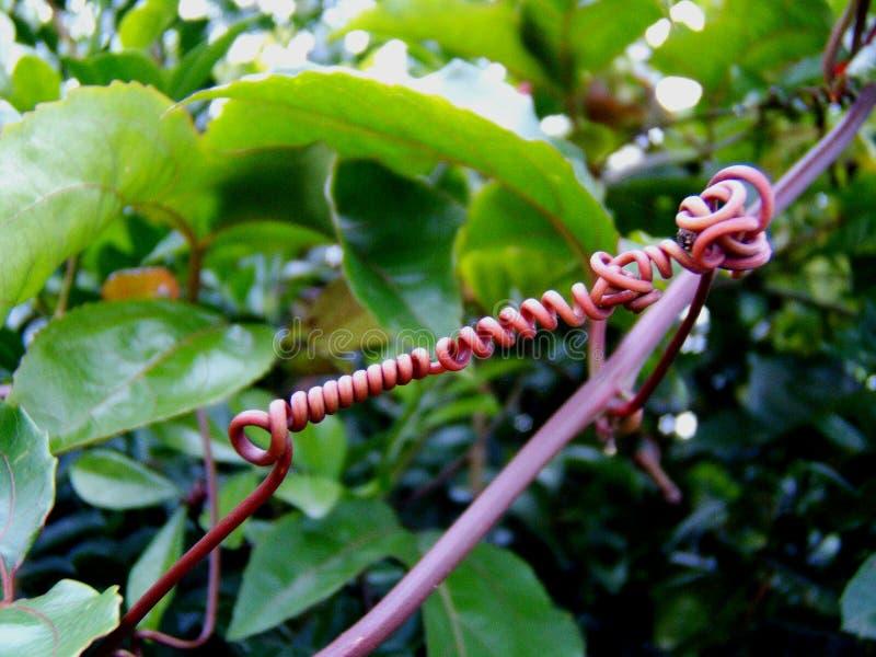 热带植物之间的强有力的链接 图库摄影
