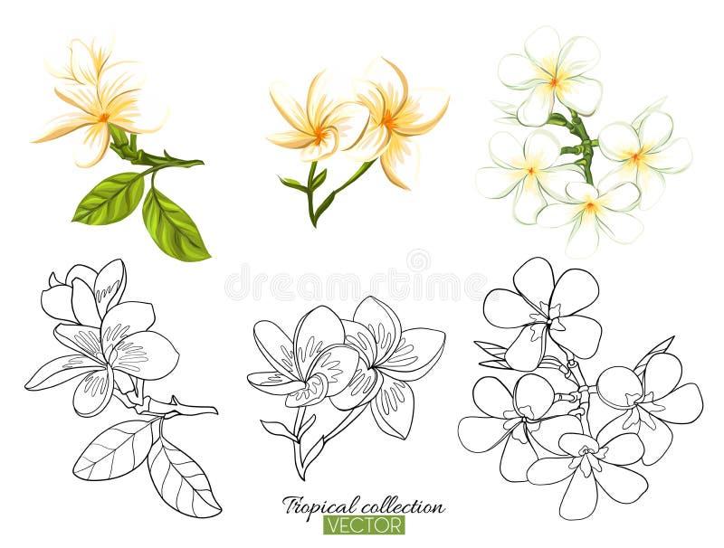 热带植物汇集在白色隔绝的传染媒介例证 向量例证