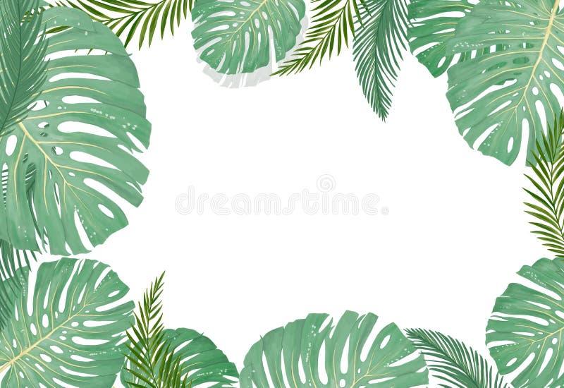 热带植物的植物、背景与椰子叶子和香蕉设计卡片密林叶子在白色背景 库存例证
