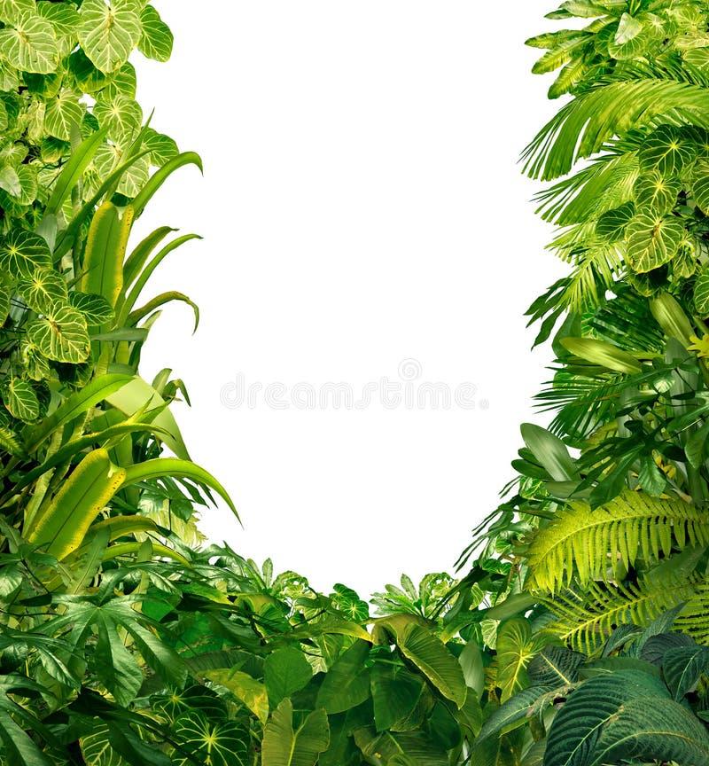热带植物空白框架 皇族释放例证
