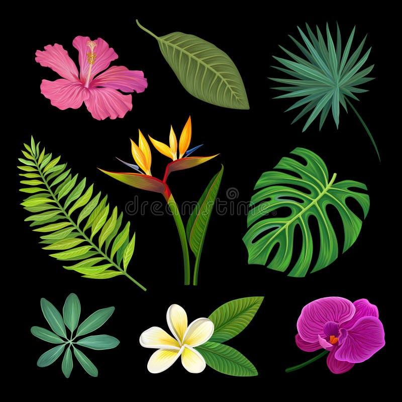 热带植物设置了,棕榈叶和异乎寻常的花,在黑背景的传染媒介Ilustrations 向量例证