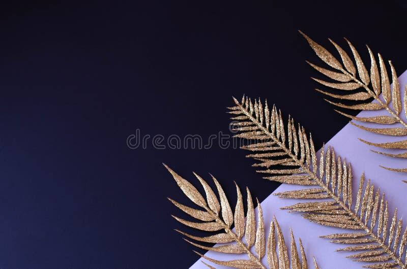 热带植物金黄分支黑背景的 免版税图库摄影