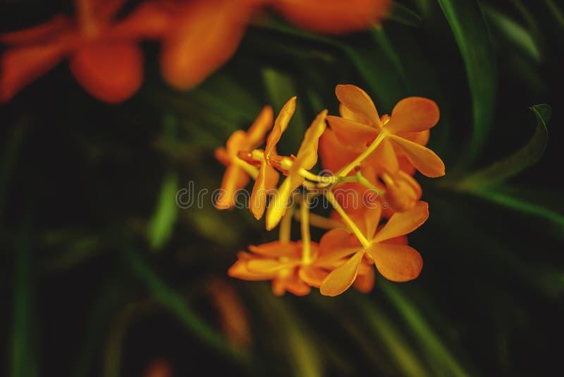 热带橙色兰花花 免版税图库摄影