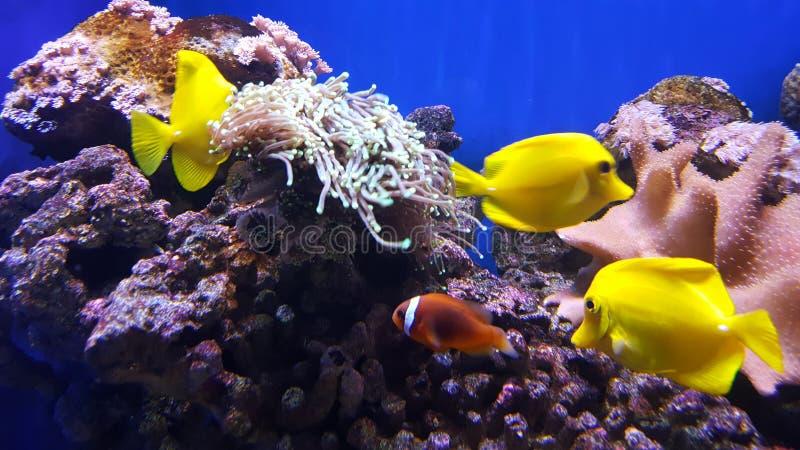 热带水族馆五颜六色的鱼 免版税图库摄影