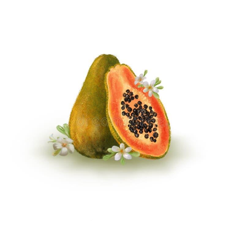 热带水果手拉的例证用番木瓜和花在被隔绝的白色背景 向量例证