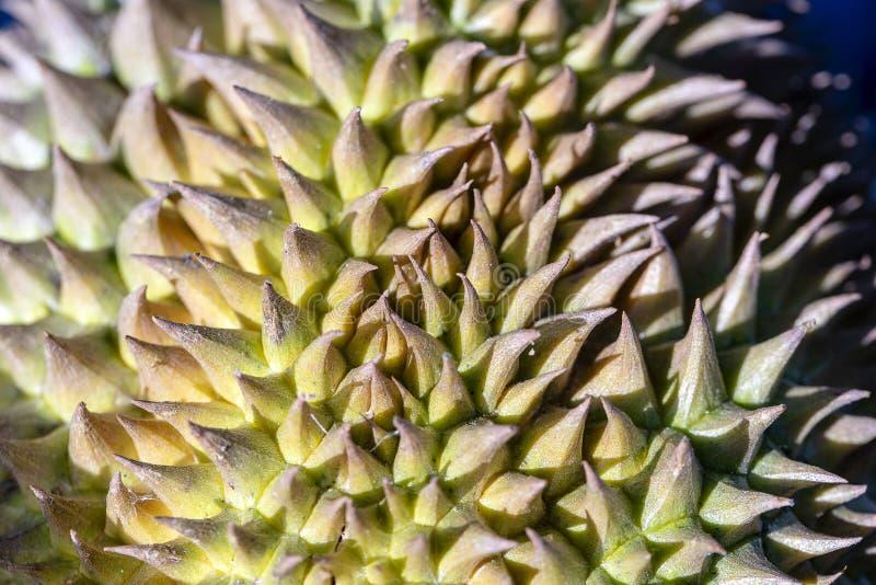 热带水果留连果尖刻的果皮 留连果与坚硬钉的皮肤纹理 在异乎寻常的果子皮肤的锋利的针 留连果成套设计 库存图片
