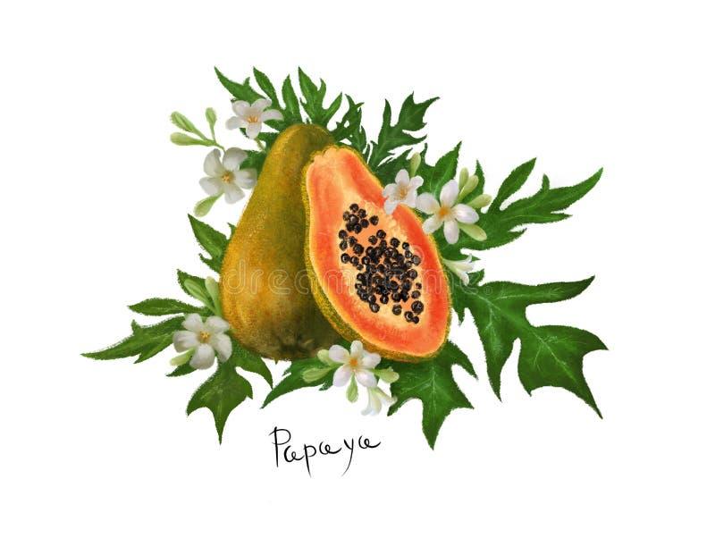 热带水果番木瓜与叶子和花的剪贴美术手拉在被隔绝的白色背景 向量例证