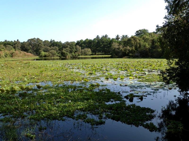 热带池塘在夏天 库存图片