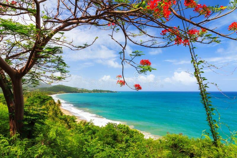 热带波多黎各 图库摄影