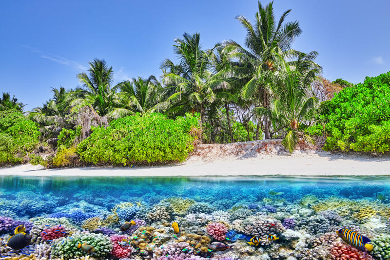 热带海岛和水下的世界在马尔代夫 免版税库存照片